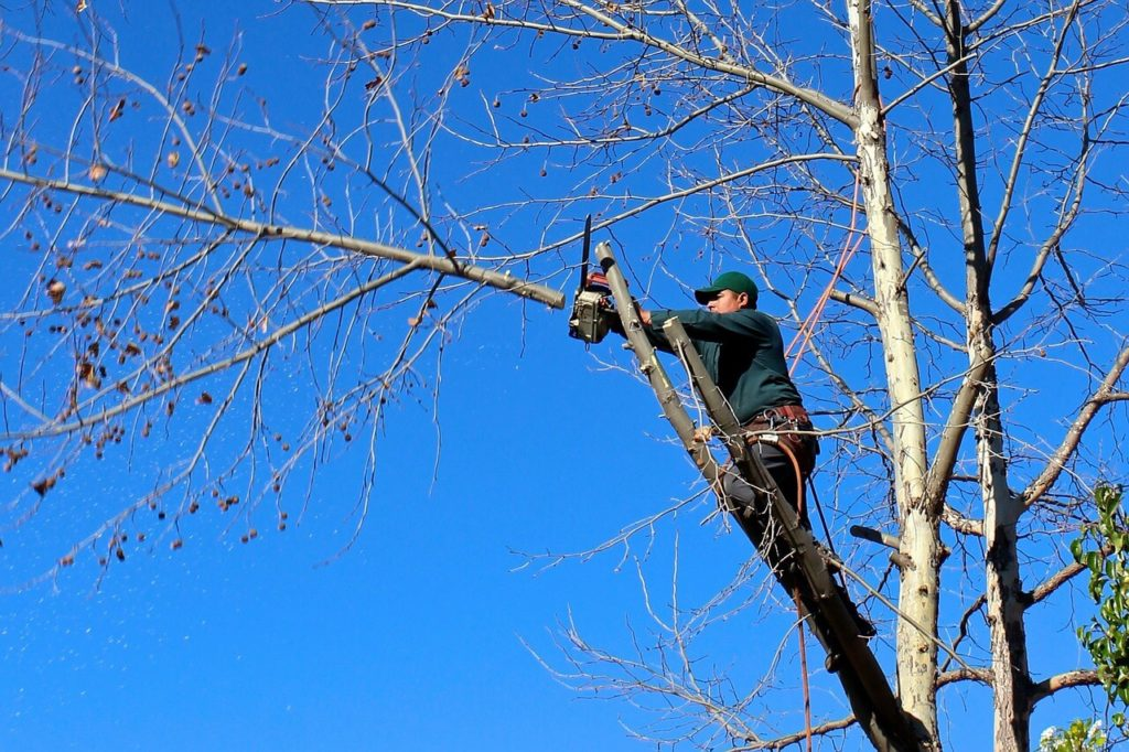 Contact Us-Myrtle Beach Tree Trimming and Tree Removal Services-We Offer Tree Trimming Services, Tree Removal, Tree Pruning, Tree Cutting, Residential and Commercial Tree Trimming Services, Storm Damage, Emergency Tree Removal, Land Clearing, Tree Companies, Tree Care Service, Stump Grinding, and we're the Best Tree Trimming Company Near You Guaranteed!