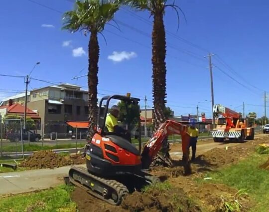 Palm Tree Removal-Myrtle Beach Tree Trimming and Tree Removal Services-We Offer Tree Trimming Services, Tree Removal, Tree Pruning, Tree Cutting, Residential and Commercial Tree Trimming Services, Storm Damage, Emergency Tree Removal, Land Clearing, Tree Companies, Tree Care Service, Stump Grinding, and we're the Best Tree Trimming Company Near You Guaranteed!