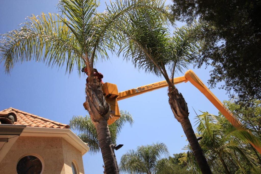 Palm Tree Trimming-Myrtle Beach Tree Trimming and Tree Removal Services-We Offer Tree Trimming Services, Tree Removal, Tree Pruning, Tree Cutting, Residential and Commercial Tree Trimming Services, Storm Damage, Emergency Tree Removal, Land Clearing, Tree Companies, Tree Care Service, Stump Grinding, and we're the Best Tree Trimming Company Near You Guaranteed!