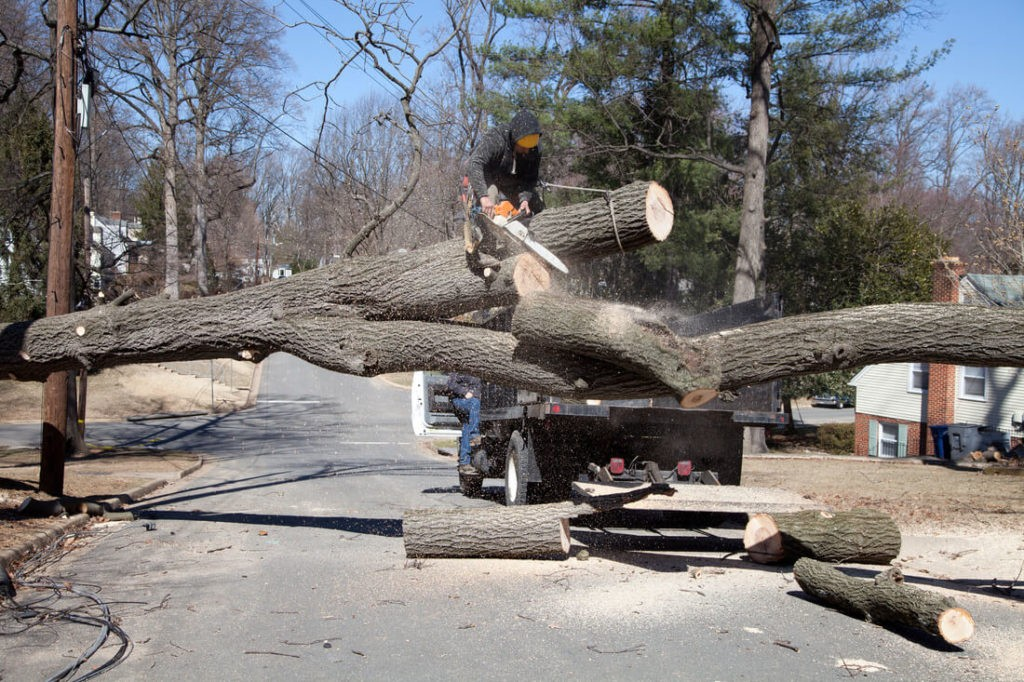 Residential Tree Services-Myrtle Beach Tree Trimming and Tree Removal Services-We Offer Tree Trimming Services, Tree Removal, Tree Pruning, Tree Cutting, Residential and Commercial Tree Trimming Services, Storm Damage, Emergency Tree Removal, Land Clearing, Tree Companies, Tree Care Service, Stump Grinding, and we're the Best Tree Trimming Company Near You Guaranteed!