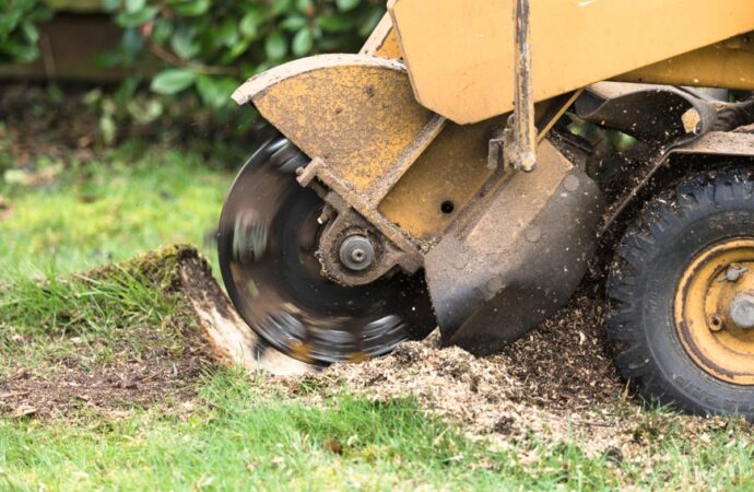 Stump Grinding-Myrtle Beach Tree Trimming and Tree Removal Services-We Offer Tree Trimming Services, Tree Removal, Tree Pruning, Tree Cutting, Residential and Commercial Tree Trimming Services, Storm Damage, Emergency Tree Removal, Land Clearing, Tree Companies, Tree Care Service, Stump Grinding, and we're the Best Tree Trimming Company Near You Guaranteed!