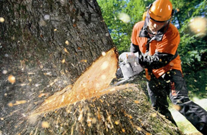 Tree Cutting-Myrtle Beach Tree Trimming and Tree Removal Services-We Offer Tree Trimming Services, Tree Removal, Tree Pruning, Tree Cutting, Residential and Commercial Tree Trimming Services, Storm Damage, Emergency Tree Removal, Land Clearing, Tree Companies, Tree Care Service, Stump Grinding, and we're the Best Tree Trimming Company Near You Guaranteed!