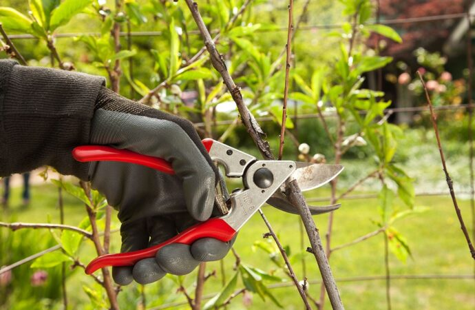 Tree Pruning-Myrtle Beach Tree Trimming and Tree Removal Services-We Offer Tree Trimming Services, Tree Removal, Tree Pruning, Tree Cutting, Residential and Commercial Tree Trimming Services, Storm Damage, Emergency Tree Removal, Land Clearing, Tree Companies, Tree Care Service, Stump Grinding, and we're the Best Tree Trimming Company Near You Guaranteed!