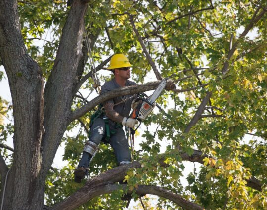 Tree Trimming and Tree Removal Services-Myrtle Beach Tree Trimming and Tree Removal Services-We Offer Tree Trimming Services, Tree Removal, Tree Pruning, Tree Cutting, Residential and Commercial Tree Trimming Services, Storm Damage, Emergency Tree Removal, Land Clearing, Tree Companies, Tree Care Service, Stump Grinding, and we're the Best Tree Trimming Company Near You Guaranteed!