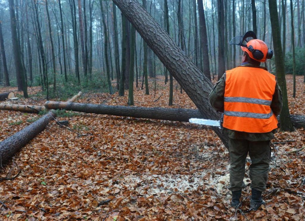 Forestbrook-Myrtle Beach Tree Trimming and Tree Removal Services-We Offer Tree Trimming Services, Tree Removal, Tree Pruning, Tree Cutting, Residential and Commercial Tree Trimming Services, Storm Damage, Emergency Tree Removal, Land Clearing, Tree Companies, Tree Care Service, Stump Grinding, and we're the Best Tree Trimming Company Near You Guaranteed!