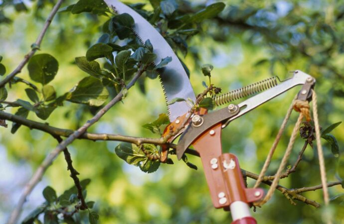 Red Hill-Myrtle Beach Tree Trimming and Tree Removal Services-We Offer Tree Trimming Services, Tree Removal, Tree Pruning, Tree Cutting, Residential and Commercial Tree Trimming Services, Storm Damage, Emergency Tree Removal, Land Clearing, Tree Companies, Tree Care Service, Stump Grinding, and we're the Best Tree Trimming Company Near You Guaranteed!