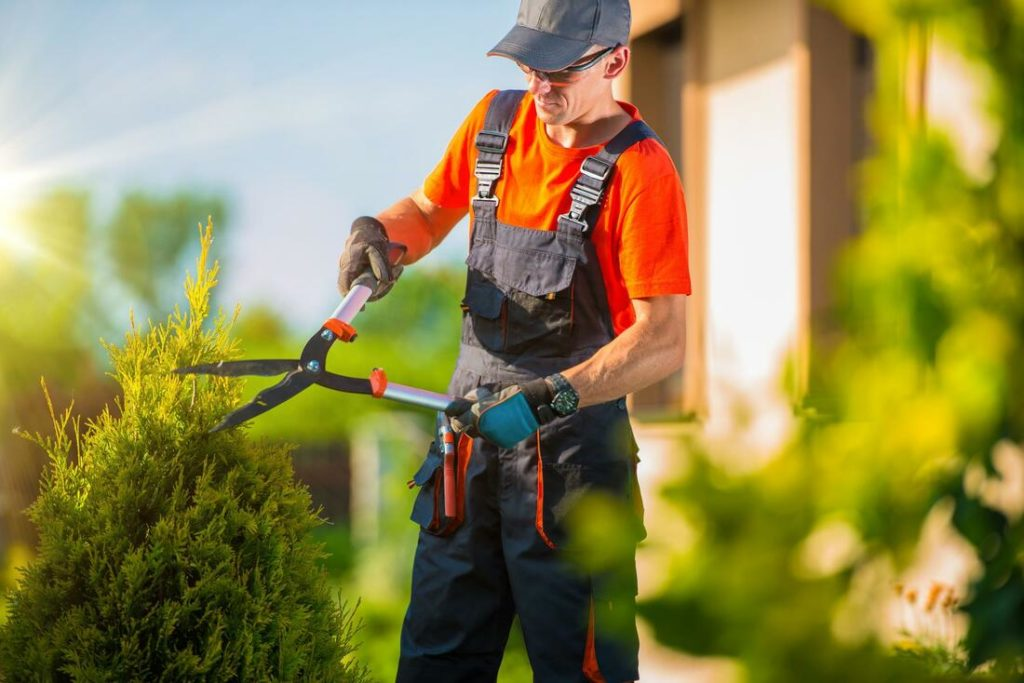 Socastee-Myrtle Beach Tree Trimming and Tree Removal Services-We Offer Tree Trimming Services, Tree Removal, Tree Pruning, Tree Cutting, Residential and Commercial Tree Trimming Services, Storm Damage, Emergency Tree Removal, Land Clearing, Tree Companies, Tree Care Service, Stump Grinding, and we're the Best Tree Trimming Company Near You Guaranteed!